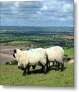 Sheep At Westbury Tor Metal Print by Kurt Van Wagner