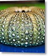 Shell With Pimples Metal Print by Kaye Menner