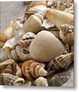 Shellfish Shells Metal Print by Bernard Jaubert