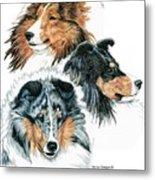 Shetland Sheepdogs Metal Print by Kathleen Sepulveda