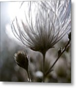 Shimmering Flower I Metal Print by Ray Laskowitz - Printscapes