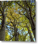 Sierra Nevada Aspen Fall Color Metal Print by Scott McGuire