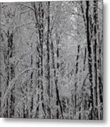 Silence Of Winter Metal Print by Gabriela Insuratelu