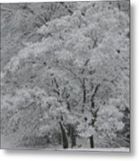 Silent White Metal Print by Christopher Ewing
