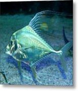 Silver Fish Metal Print by Svetlana Sewell