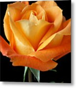 Single Orange Rose Metal Print by Garry Gay
