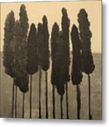 Skinny Trees In Sepia Metal Print by Marsha Heiken