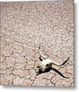 Skull In Desert Metal Print by Kelley King