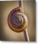 Snail On A Stick Metal Print by Kelley King