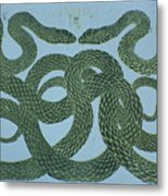 Snake Council Metal Print by Pati Hays
