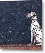 Snow Dog Metal Print by Yury Bashkin