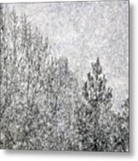 Snow Squawl Metal Print by Laura Mountainspring