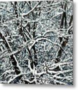 Snow Tree Metal Print by Nadi Spencer