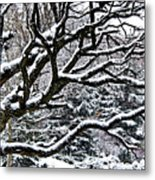 Snowfall And Tree Metal Print by Elena Elisseeva