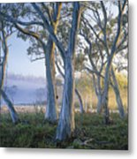 Snowgums At Navarre Plains, South Of Lake St Clair. Metal Print by Rob Blakers