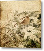 Sparrow In Winter I - Textured Metal Print by Angie Tirado