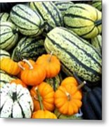 Squash Harvest Metal Print by Will Borden