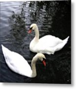 Stanley Park Swans Metal Print by Will Borden