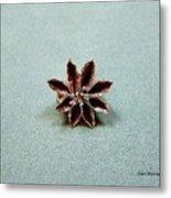 Star Flower Metal Print by Stan Mowatt
