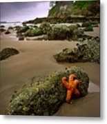 Starfish On The Rocks Metal Print by Inge Johnsson