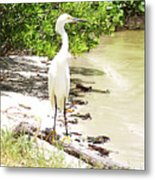 Still Looking For Lunch Gp Metal Print by Chris Andruskiewicz