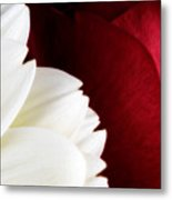 Strawberry And Cream Metal Print by Mark Johnson