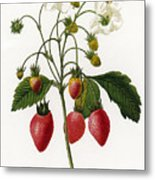 Strawberry Metal Print by Granger