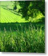 Summer Fields Of Green Metal Print by Sandra Cunningham