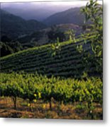 Summer Vineyard Metal Print by Kathy Yates