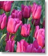 Sunlight On Pink Tulips Metal Print by Carol Groenen