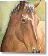 Sunlit Horse Metal Print by Patricia Pushaw