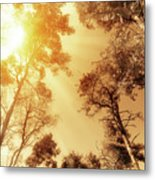 Sunlit Tree Tops Metal Print by Wim Lanclus