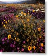 Sunrise On Desert Wildflowers Metal Print by Tim Laman