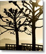 Sunrise Trees Metal Print by Tom Rickborn