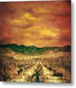 Sunset Over Vineyard Metal Print by Jill Battaglia