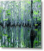 Swamp In Louisiana Metal Print by Ester  Rogers