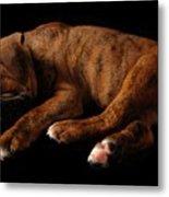Sweet Dreams Puppy Metal Print by Angie Tirado-McKenzie