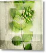 Sweet Rustic Pine Metal Print by Dan Turner