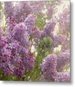 Swimming In A Sea Of Lilacs Metal Print by Cindy Garber Iverson