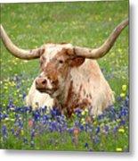 Texas Longhorn In Bluebonnets Metal Print by Jon Holiday