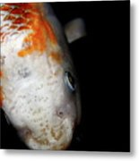 The Ancient One . Koi Fish . 7d5486 Metal Print by Wingsdomain Art and Photography