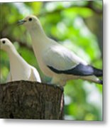 The Duet Metal Print by Judy Kay