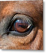 The Equine Eye Metal Print by Terry Kirkland Cook
