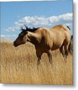 The Horse Metal Print by Ernie Echols