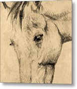The Horse Portrait Metal Print by Odon Czintos