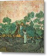 The Olive Pickers Metal Print by Vincent van Gogh