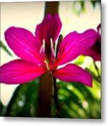The Pink Lady Metal Print by Karen Wiles