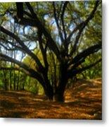 The Sacred Oak Metal Print by David Lee Thompson