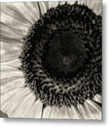 The Sunflower Metal Print by Michael Wade