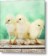 Three Amigos Metal Print by Amy Tyler